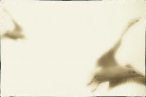 Möwe-A-2-b_Snapseed